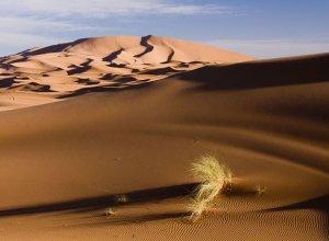 Пять странных феноменов природы