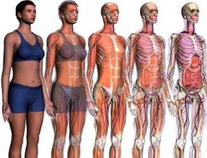 Без каких органов может жить человек?