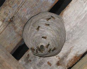 Избавляемся от насекомых снаружи дома
