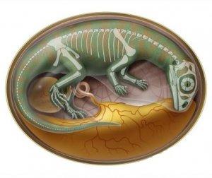 Кладбище зародышей динозавров
