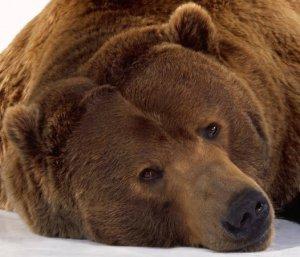 Палатка и медвежья шкура