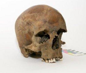 В Австралии найден очень старый череп